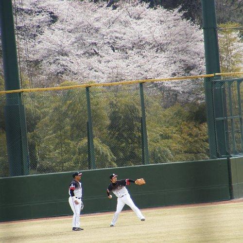 G 桜21 あきらさん.JPG